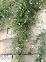 biz - flower wall europe